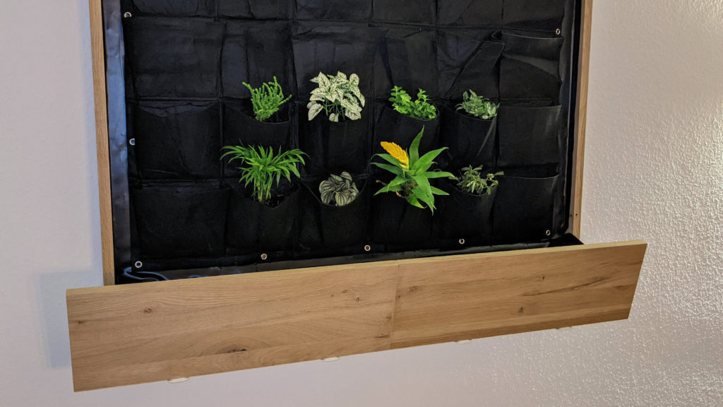 living wall with the first couple of plants